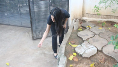 Photo of Shruti Haasan Feeding Food To Stray Dogs
